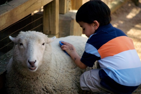 Kid_petting_sheep,_Zoo_Atlanta