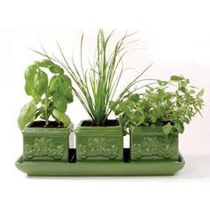 growing-herbs-inside-trio-set