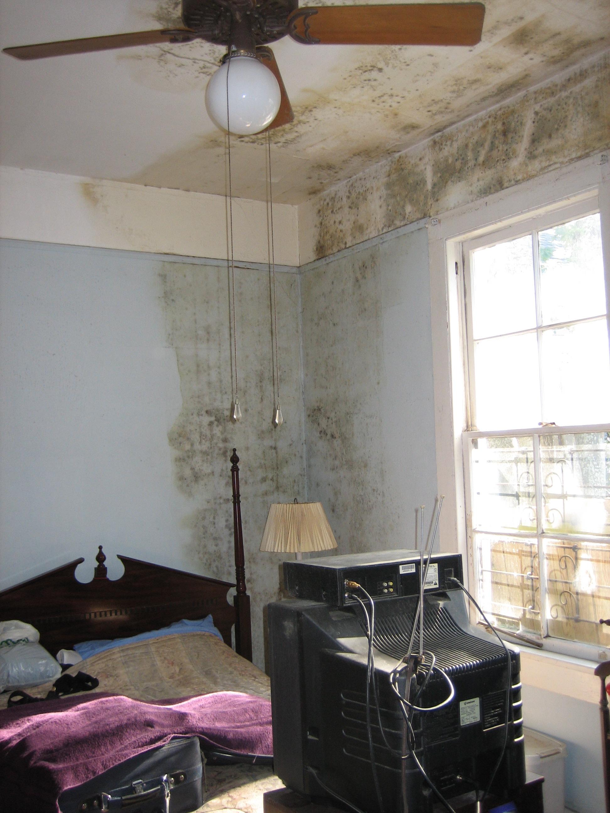 Kamar tidur berjamur dan lembap